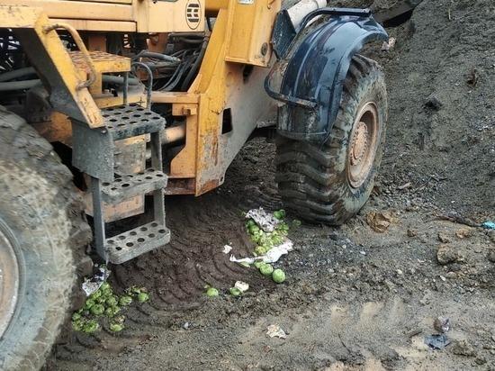 В Екатеринбурге сожгли больше тонны говядины и раздавили яблоки