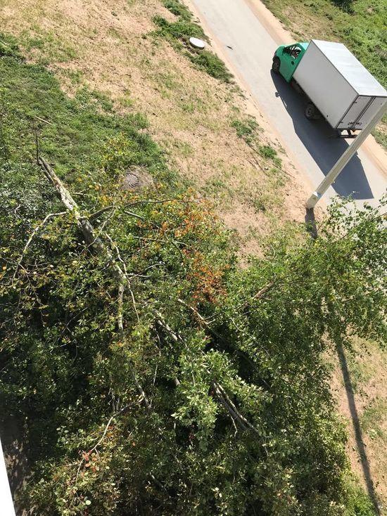 Из-за сильного ветра в Овсище упало дерево