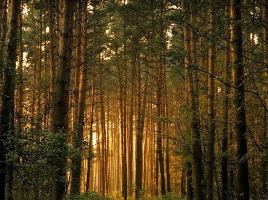 В Воронеже неизвестные вновь сверлили деревья в Северном лесу