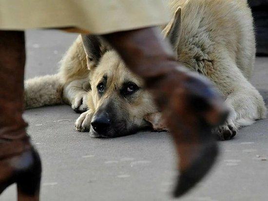В Саяногорске одни жители просят выловить бродячих собак, другие грозятся убить ловцов