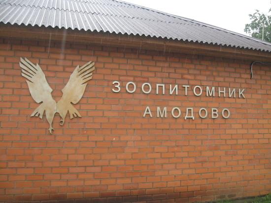 Читинские волонтёры «Нoрникеля» научатся разработке экоквестов