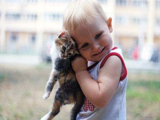 Породы кошек, которые подружатся с маленькими детьми и не поцарапают их
