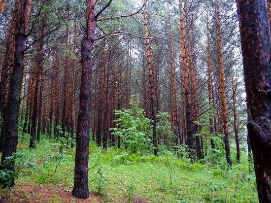 Башкирские спасатели разыскали заблудившегося в лесу мужчину