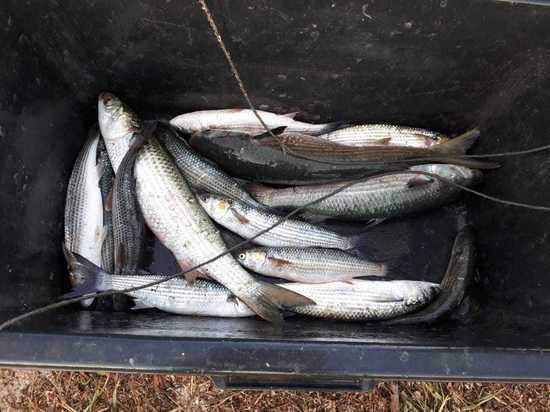У Керченского пролива задержали рыбака с кефалью на полмиллиона рублей