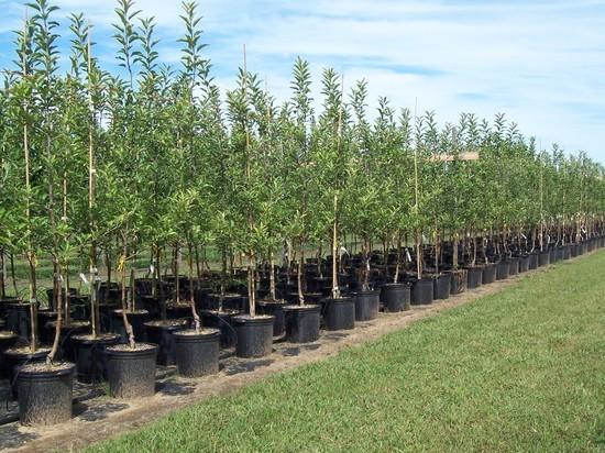 В Кармаскалинском районе Башкирии высадят 12 тысяч саженцев деревьев