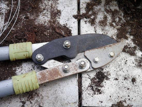 Жена кастрировала мужа садовыми ножницами
