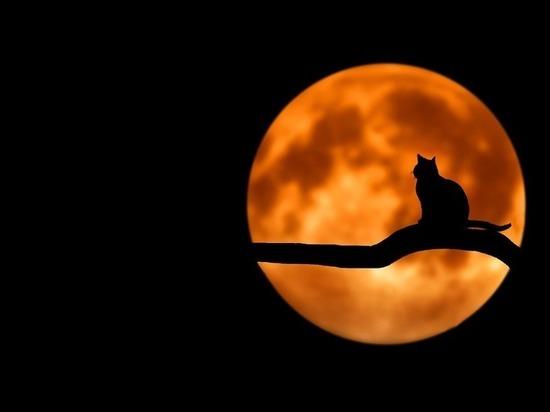 Сегодня Полная Луна: как не отдать все свои силы