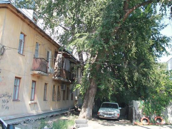 Кто спилит нависшее над домом дерево в Волгограде