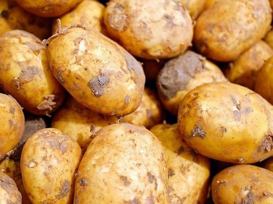 Причиной смерти людей под Челябинском оказался гниющий картофель