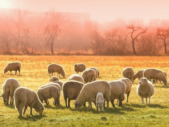 От чего можно излечиться в день Мамонта-овчинника: приметы на 15 сентября