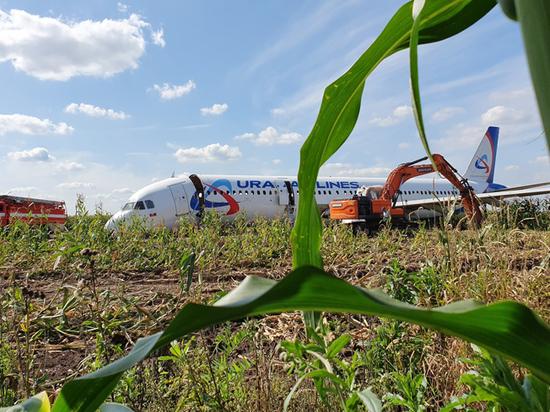 МАК обнародовал промежуточные итоги расследования посадки А321 в кукурузное поле