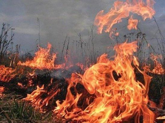 В Ростове в ближайшие дни прогнозируют чрезвычайную пожароопасность