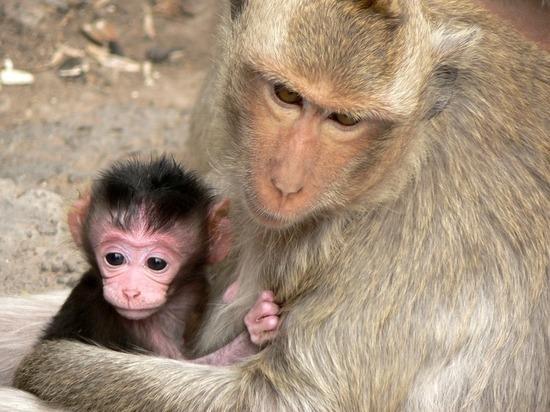 В Казани продают обезьяну почти за 200 тыс. рублей