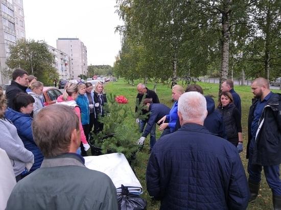 Посадить дерево: новые ели и сосны украсили Петрозаводск