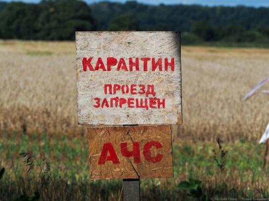 В Хабаровском крае усилены меры безопасности из-за вспышки африканской чумы свиней