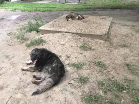 В УДИБ заявили об отсутствии агрессивных бездомных собак в Красноярске