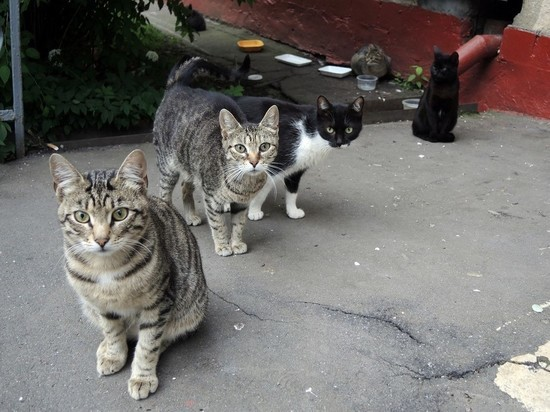 Отлов бездомных животных обязали снимать на видео