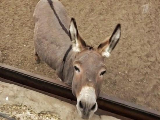 Животные калужского зоопарка стали