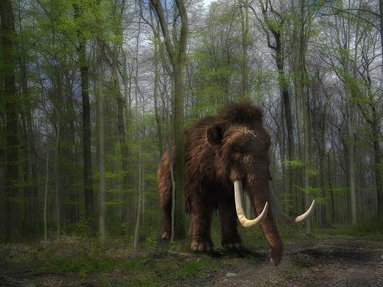 В «Луговском» ищут кости мамонтов