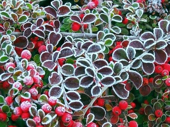 В Курске на этой неделе ожидается пришествие заморозков