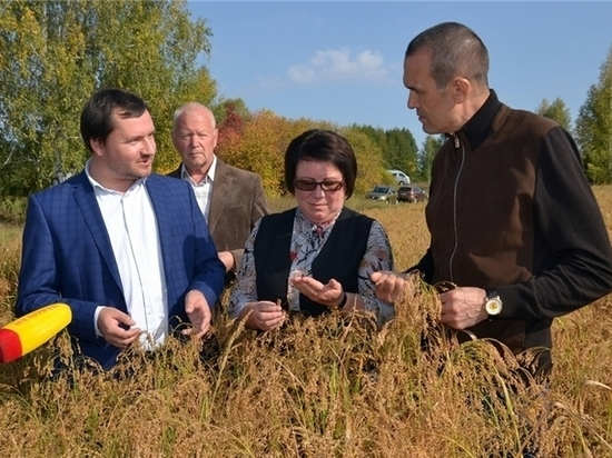 Урожайность зерновых в хозяйствах Чувашии достигает 49 ц с гектара