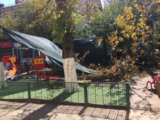 Заведующая детсадом, где дерево упало на детей, пойдёт под суд