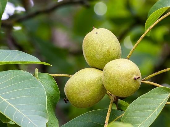 Ученые подсказали, какой фрукт может омолодить кровь