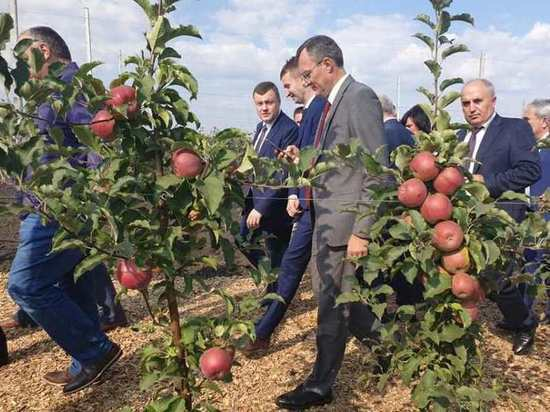 Тамбовский яблоневый рай