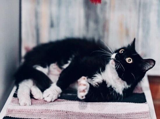 Следствие по делу гибели животных в оренбургском приюте продолжается