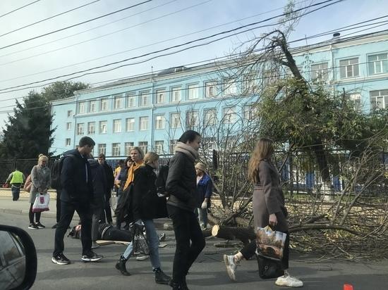 В центре Рязани на мужчину упала ветка