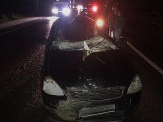 Лось погиб, водитель в больнице: в Ярославской области очередное ДТП с лосем