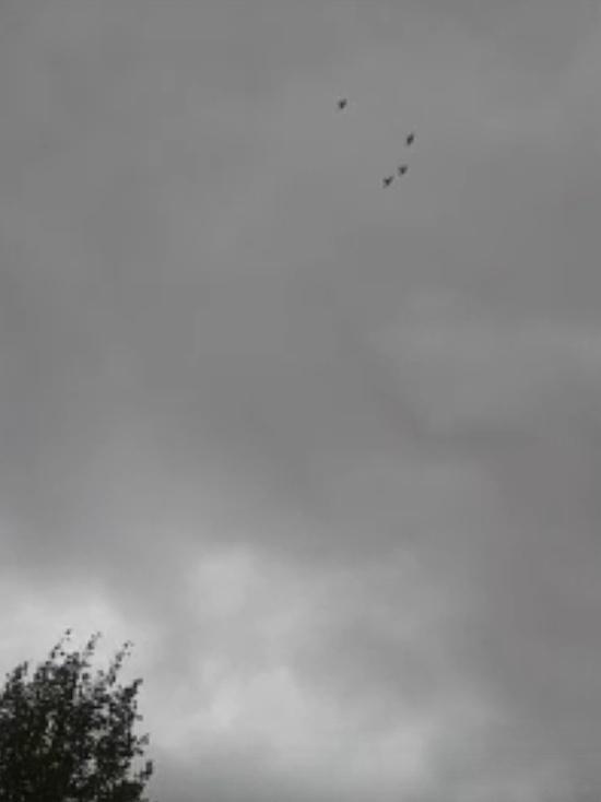 Завораживающее «авиашоу» птиц попало на видео в Губкинском