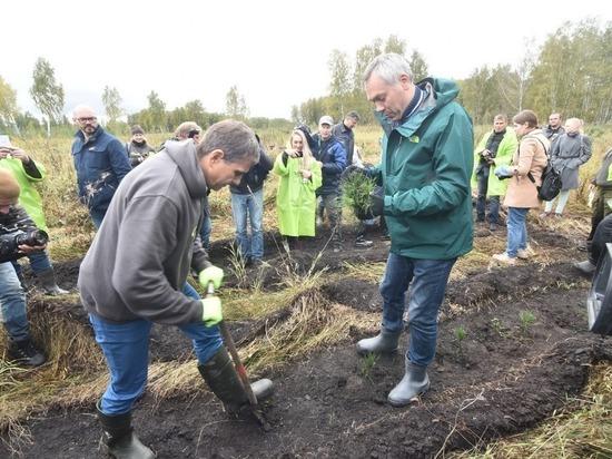 Губернатор принял участие в акции по высадке саженцев сосны