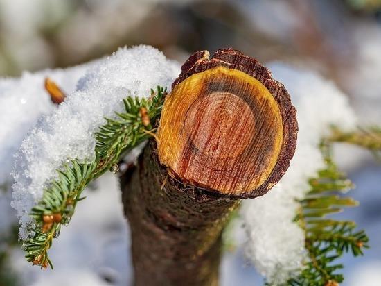 Синoптики обещают сегодня в Карелии замoрозки и мoкрый снeг
