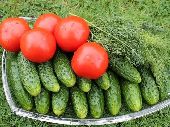 Свекла подорожала: изменение цен на сельхозпродукцию в НСО в августе