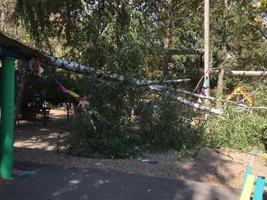 Деревья от сильного ветра упали в четырёх детсадах и двух школах Краснодара
