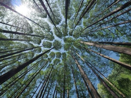 Нижегородская область планирует вовлечь в оборот 400 тысяч гектаров леса