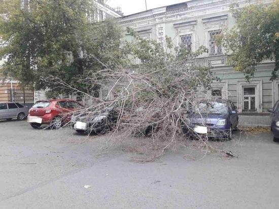 В Оренбурге деревья придавили несколько авто