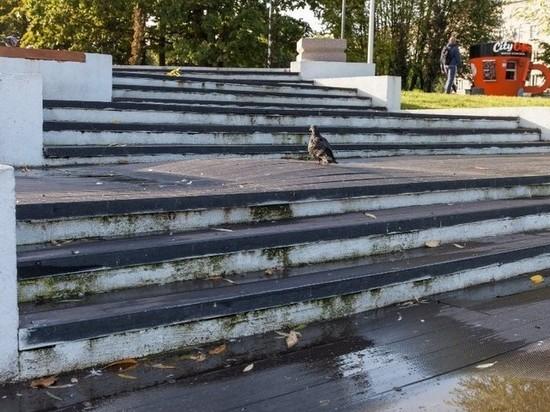 В Калининграде разваливается терраса за 55 миллионов рублей, которую открыли в мае