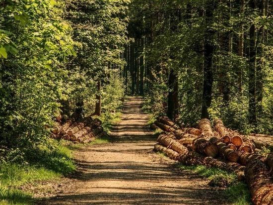 Новую концепцию лесопользования внедряют в Нижегородской области