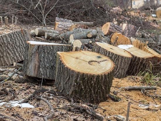 Житель Горячего Ключа попал под следствие по делу о незаконной рубке леса