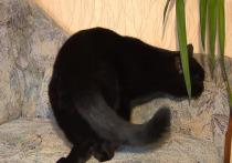 Против москвички, выкинувшей кота из окна, возбудили дело
