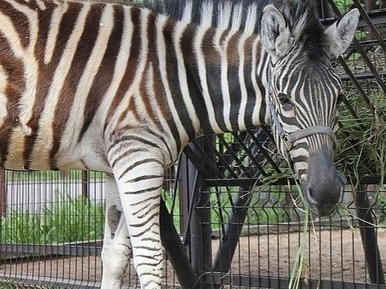 В Ижевском зоопарке временно перевели в закрытые вольеры некоторых животных