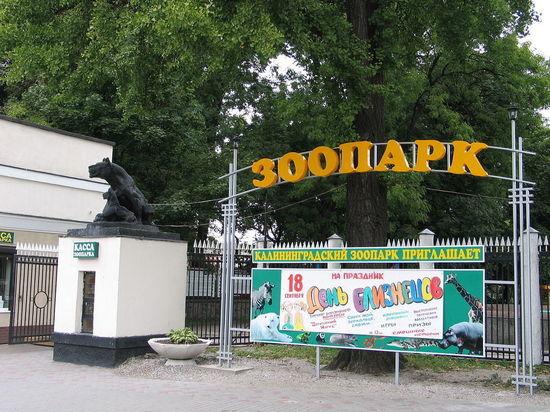 В Калининграде за 15 миллионов рублей отреставрируют скульптуры в зоопарке