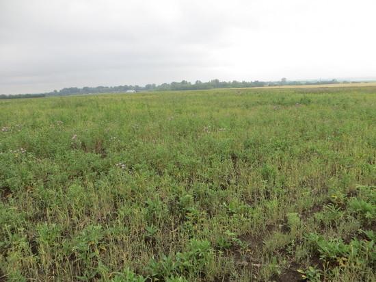 В Саракташском районе предприниматель заплатит 400 000 рублей за заросшее поле