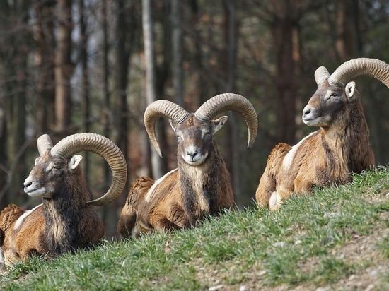 В Минприроды пересчитали всех зверей в России: цифры удивили