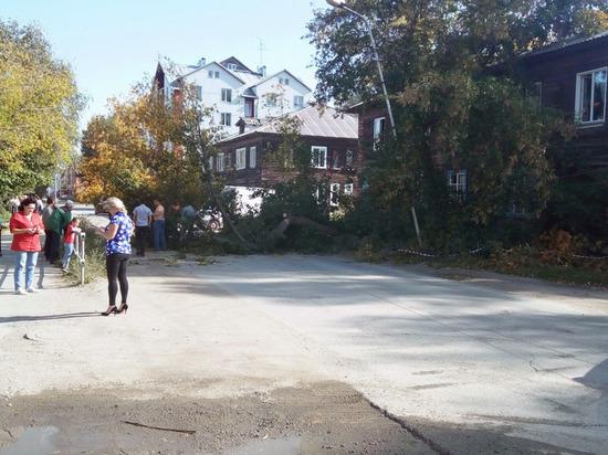 Сильный ветер уронил в Новосибирске четыре дерева