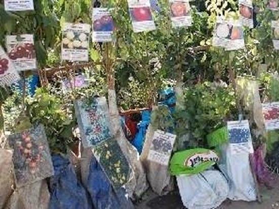 Растения с продажи сняли прямо на ярмарке