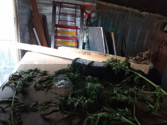 Житель поселка под Тверью  попал под следствие из-за «травы»