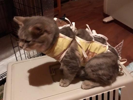 В Рязани ищут дом кошке, которую ранили в живот во время беременности